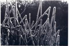 frost suffolk