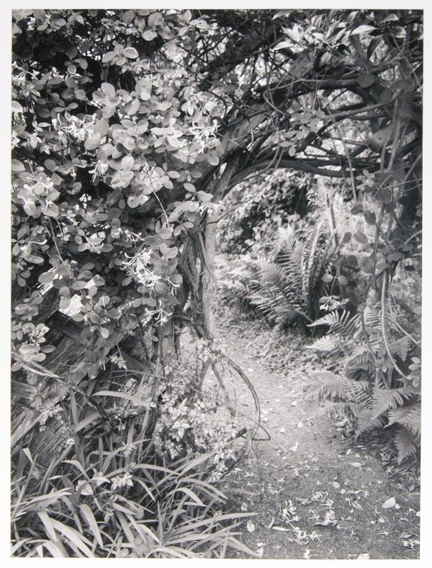 Honeysuckle, Scilly Isles