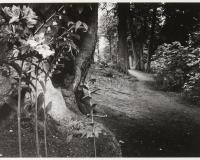 Windsor Park, The Saville Garden