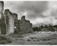 Dunbrody Abbey, Co. Wexford, Ireland