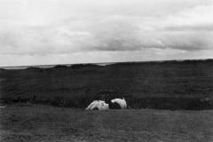 m051-allonby1979
